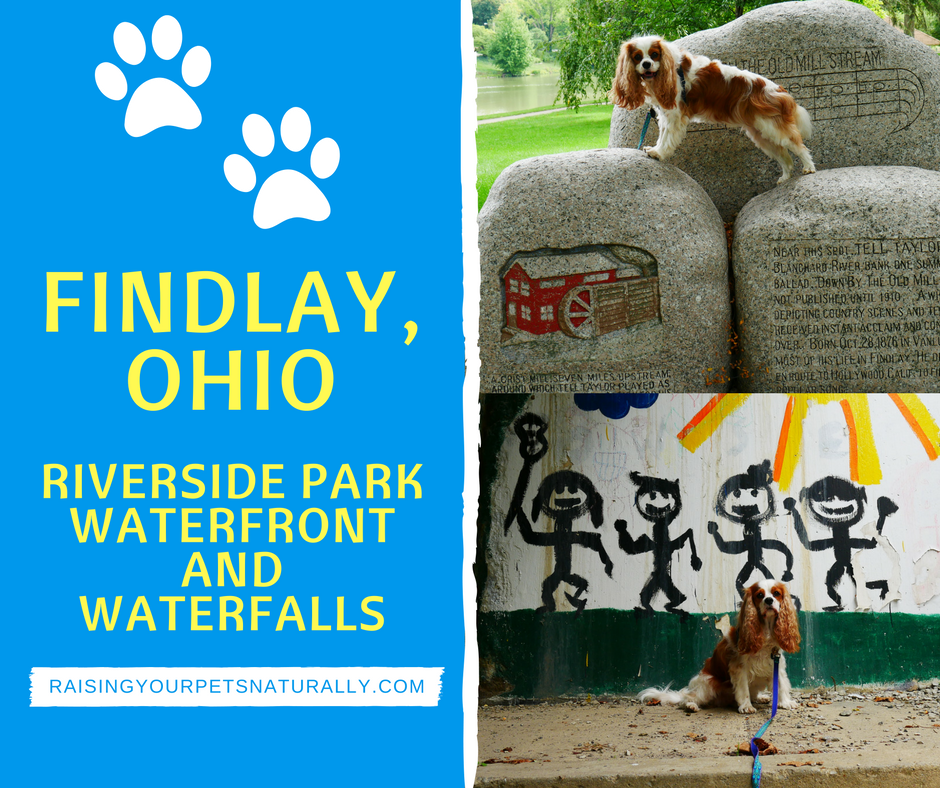 Dog-Friendly Findlay, Ohio