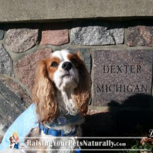 Dog-Friendly DEXTER Michigan