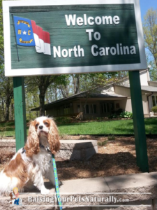 Vacations with Dogs: North Carolina
