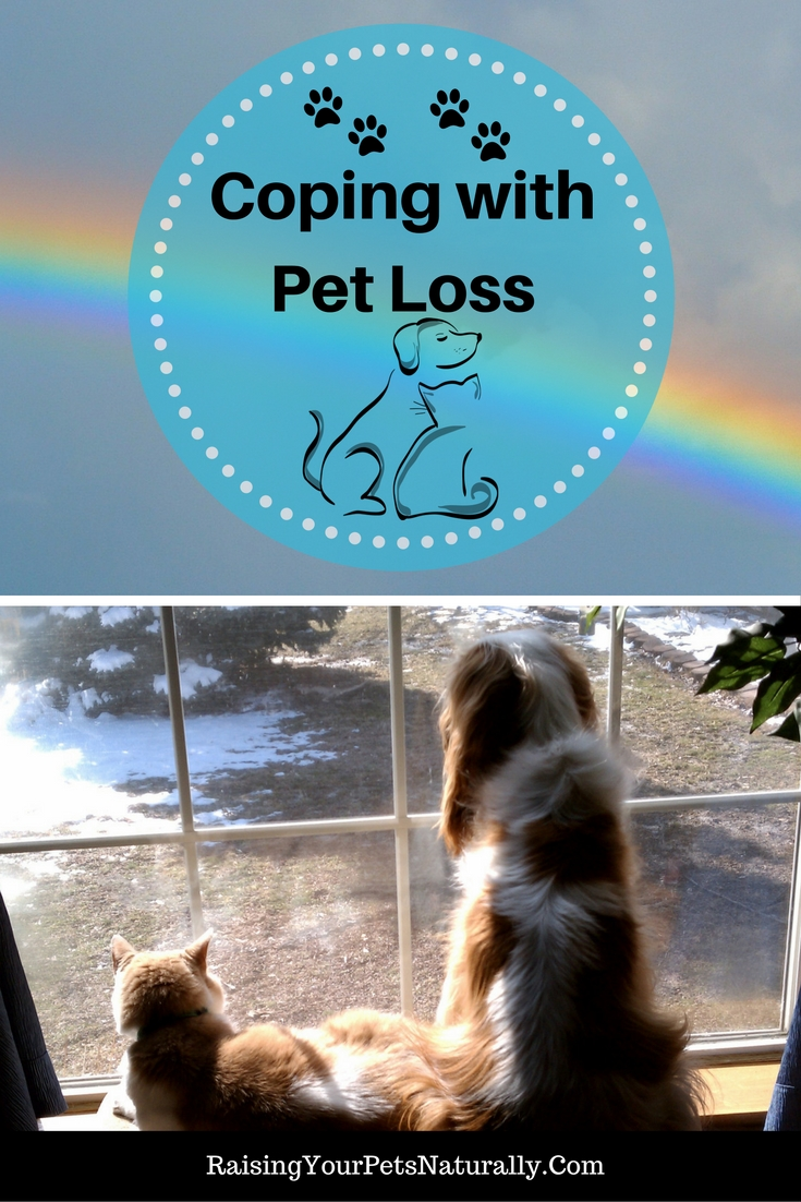How to cope with the loss of a pet. Grieving the loss of a pet can be extremely difficult. How to deal with the loss of a pet is completely personal. Read for pet loss support. #raisingyourpetsnaturally
