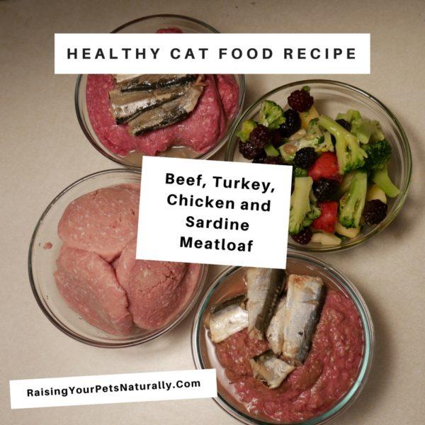 Best cat food recipes