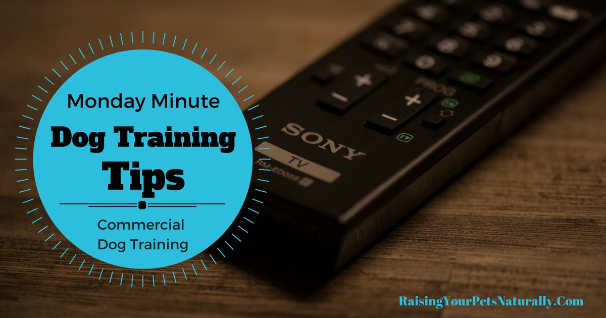 Dog Training Tips for Creative Dog Training. Learn how to train your dog in minutes using positive reinforcement dog training. #raisingyourpetsnaturally