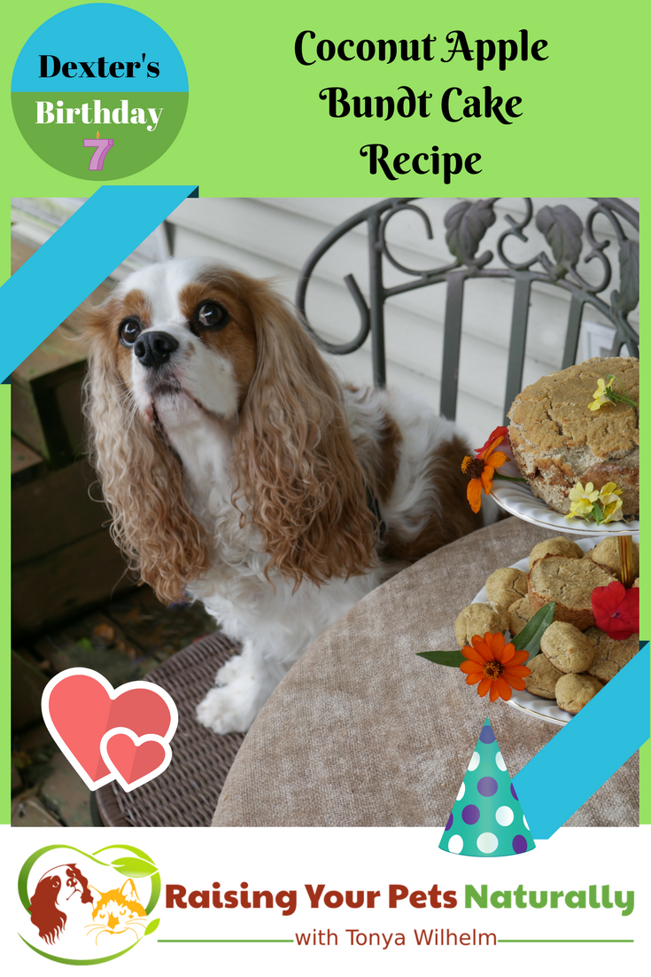 Healthy Homemade Dog Birthday Cake Recipe. Learn how to make a cake for your dog! #raisingyourpetsnaturally #dogbirthdaycake #dogbirthdaycakerecipe #dogcake #dogcakerecipe #puppycake