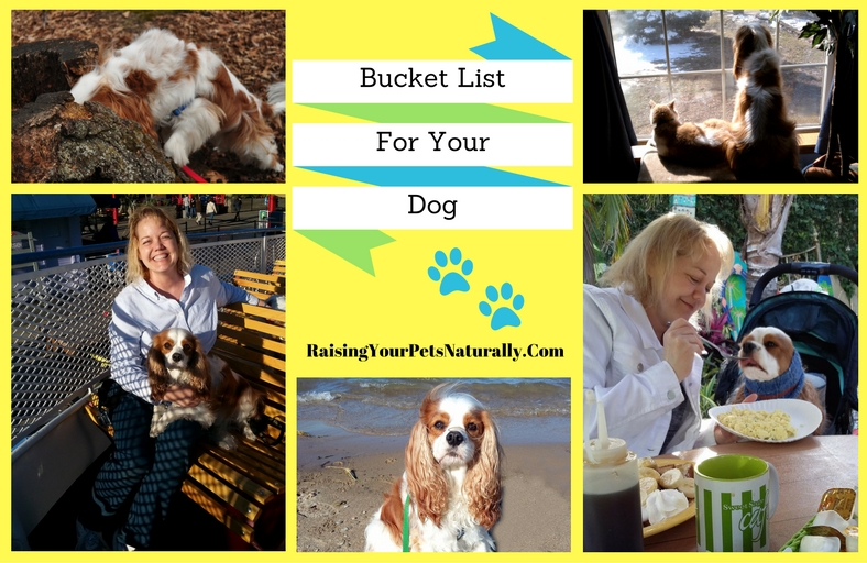 Bucket List Ideas for You and Your Dog
