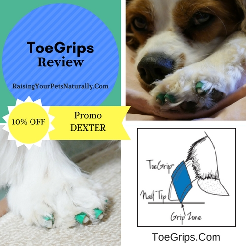 """My vet and I thought that ToeGrips might benefit Dexter in helping him """"grab"""" walking surfaces, so I contacted Dr. Julie Buzby, the founder of ToeGrips, to see if we could try them and provide a review. Dr. Buzby was more than happy to allow Dexter and me to try a set, to see if they would provide proprioceptive stimulus and help Dexter to pick up his feet."""