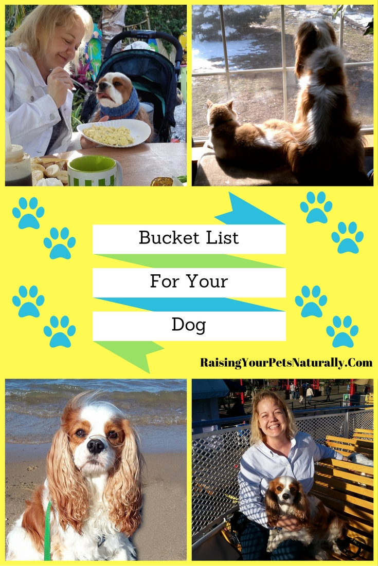 Bucket List Ideas for You and Your Dog. What would your dog consider the best bucket list? Here are some fun ideas that you and your dog can easily do. #raisingyourpetsnaturally #bucketlist #dogbucketlist #travelbucketlist
