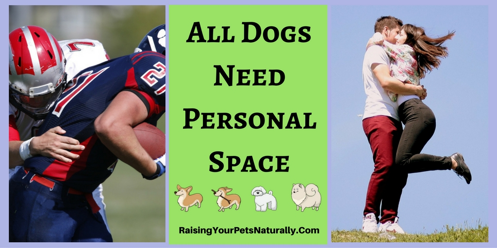 All Dogs Deserve Space. Learn why all dogs need their personal space and how to properly greet a dog. #raisingyourpetsnaturally