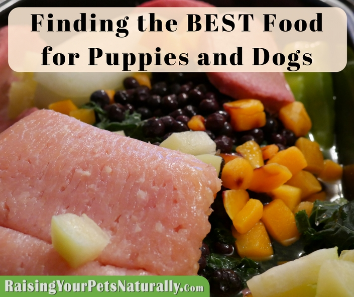 Learn how to find the best dog food for dogs and puppies. What Is The Best Dog Food Dog Nutrition and Holistic Pet Care and Food #raisingyourpetsnaturally