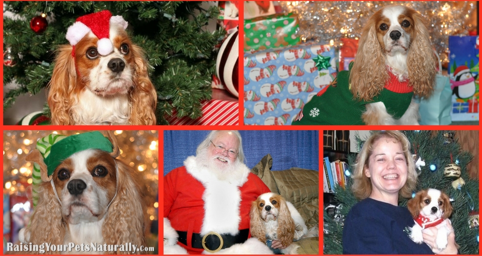 Holiday celebrations with pets.