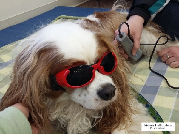 Cavalier laser therapy