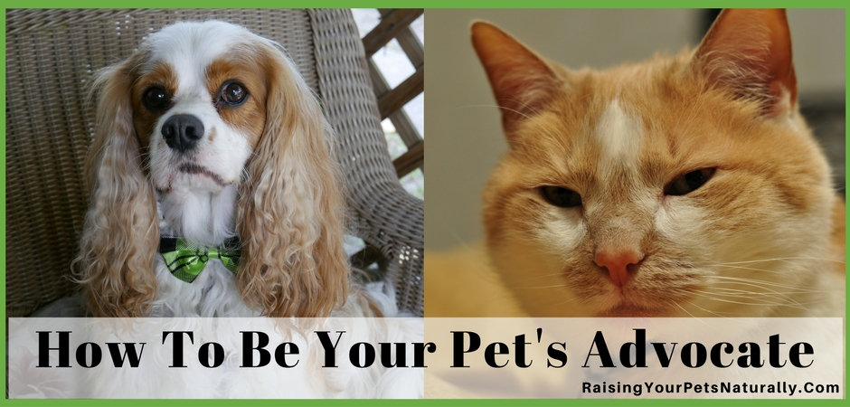 I know sometimes people may think of me as extreme and maybe even over the top when it comes to the care I give my pets, but I don't agree. Unlike an adult person, my pets can't make choices on their medical care, exercise routine, or diet. These are decisions that I make for them.