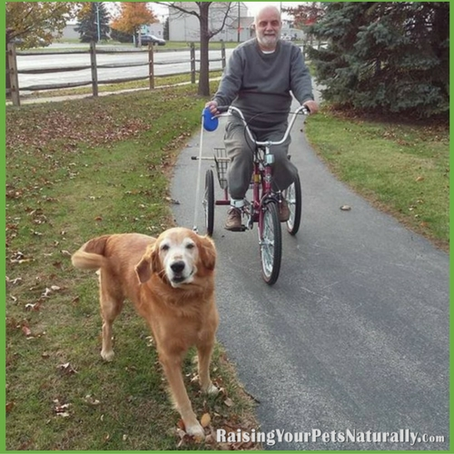 Teaching a dog to run with a bike.