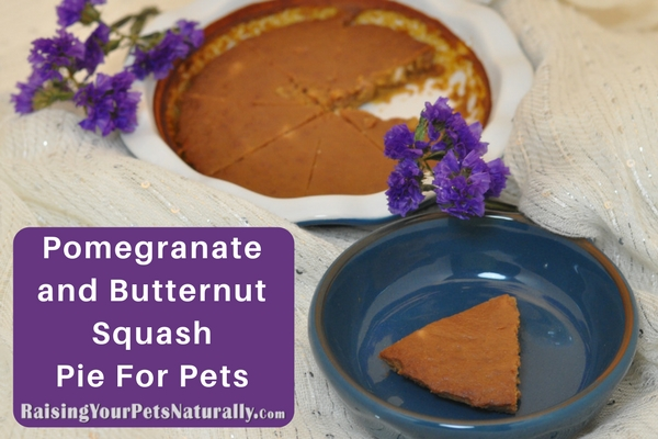 Pomegranate and Butternut Squash Pie for Dogs, Cats and Pets. A perfect fall pie. Your canine will be licking his chops for seconds.