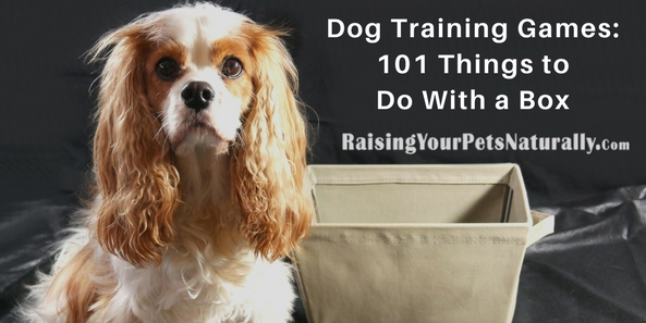 This dog training game is a way to allow and encourage a dog to offer his own behaviors and reward the behaviors you like and ignore the behavior you are not going for. This type of dog training, or shaping, is great for encouraging a dog who is somewhat shut down to offer behaviors. In the beginning stages of the 101 Things to Do With a Box game, you want your dog to be almost always right!