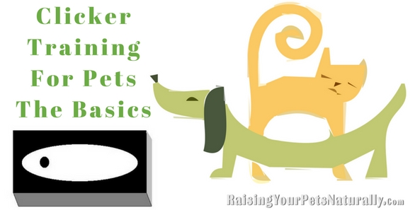 Dog Training and Cat Training with a Clicker. Clicker dog and cat training is not only a creative way to train your pet, but a very effective and easy way to train. Learn how to clicker train today. #raisingyourpetsnaturally