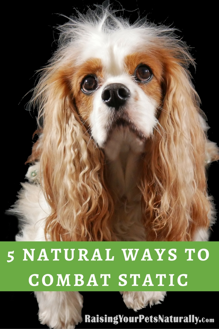 Here are five ways to naturally help combat static electricity in your home and with your pet. #raisingyourpetsnaturally #static #naturalpets #naturaldogs