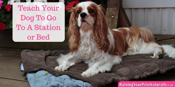 Cool Tricks to Teach Your Dog  Teaching Your Dog to Go to His Bed or Station. Teaching your dog to go to a specific place on cue and stay can help in a variety of ways. You can teach your dog to go to his spot when the doorbell rings, when you're eating dinner, or even when you want to clean up a spill. It's a great behavior to use when teaching a variety ofdog tricksandfreestyle dog dancing.
