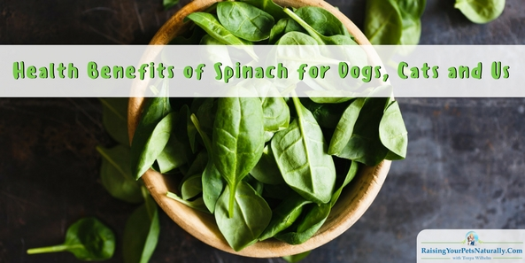 Can Dogs Eat Spinach? Can Cats Eat Spinach? Health Benefits of Spinach. When choosing healthy foods for our pets and ourselves, remember that leafy greens such as spinach contain a lot of health benefits for dogs, cats, and ourselves. I'll discuss some of the health benefits of spinach.