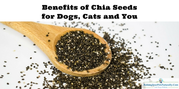 Benefits of Chia Seeds for Dogs, Cats and Us. Chia seeds are packed with nutrients and naturally boost energy and endurance. Chia seeds are rich in omega-3 fatty acids; vitamins A, B, E, and D; minerals, fiber, calcium, and protein, and are a great source of antioxidants. #raisingyourpetsnaturally