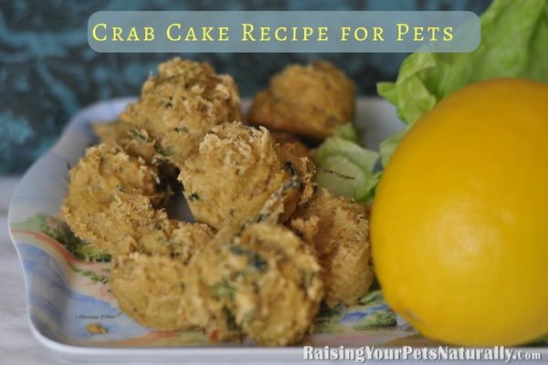 Healthy and Natural Dog and Cat Treat Recipes Homemade Healthy Dog and Cat Treats | Crab Cakes for Dogs and Cats