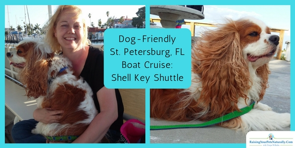 Dog-Friendly Petersburg, Florida |Boat Cruise: Shell Key Shuttle. During our dog-friendly Florida vacation, we had to do a dog-friendly sunset cruise!  This Florida dolphin cruise was very enjoyable, and the captain and crew were welcoming and friendly. We started with a great sight-seeing cruise through residential waterways and through the inspiring barrier islands south of Pass-a-Grille. We went from historic cypress beach cabins to modern multi-million dollar mansions. The captain even stopped and pointed out numerous shorebirds.