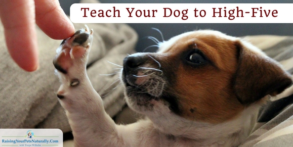 Dog Tricks | Teach Your Dog to High-Five. Dog tricks are an amazing way to connect with your dog. Learn this cool dog trick. #raisingyourpetsnaturally