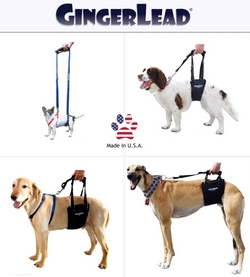 GingerLead Order Today