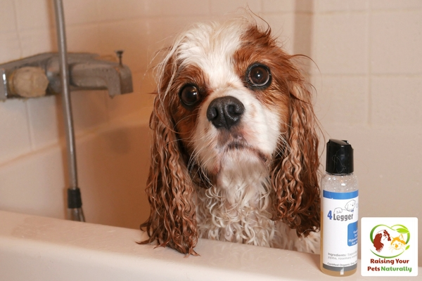 Best smelling organic dog shampoo for scratching. 4-Legger custom dog shampoo blends.