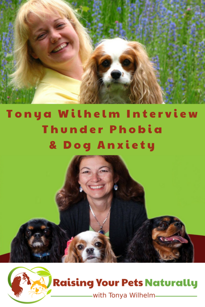 Dog anxiety and how to naturally help a scared dog. Learn some common dog anxiety symptoms and how to help a dog scared of thunder in my interview with Dr. Judy Morgan #raisingyourpetsnaturally