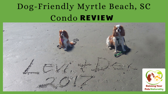 Dog-Friendly Myrtle Beach Vacations and Beach Condo Review. Traveling with your dog can be a blast if you stay in a great dog-friendly beach condo! Click to read our review. #raisingyourpetsnaturally