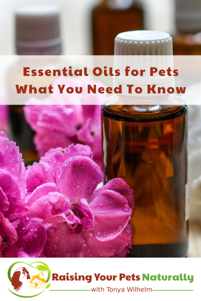 Are essential oils for dogs, cats, and pets safe? Learn how to use essential oils safely with your pets to help with anxiety, allergies, fleas and more. #raisingyourpetsnaturally #essentialoils #eos #essentialoilsforpets #essentialoilsfordogs