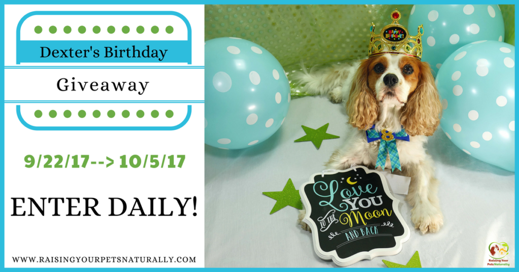 Dexter The Dog's Birthday Blog Giveaway Pet Contest 2017. Help me celebrate Dexter's eighth birthday! This year I will be hosting a giveaway to honor Dexter. #raisingyourpetsnaturally