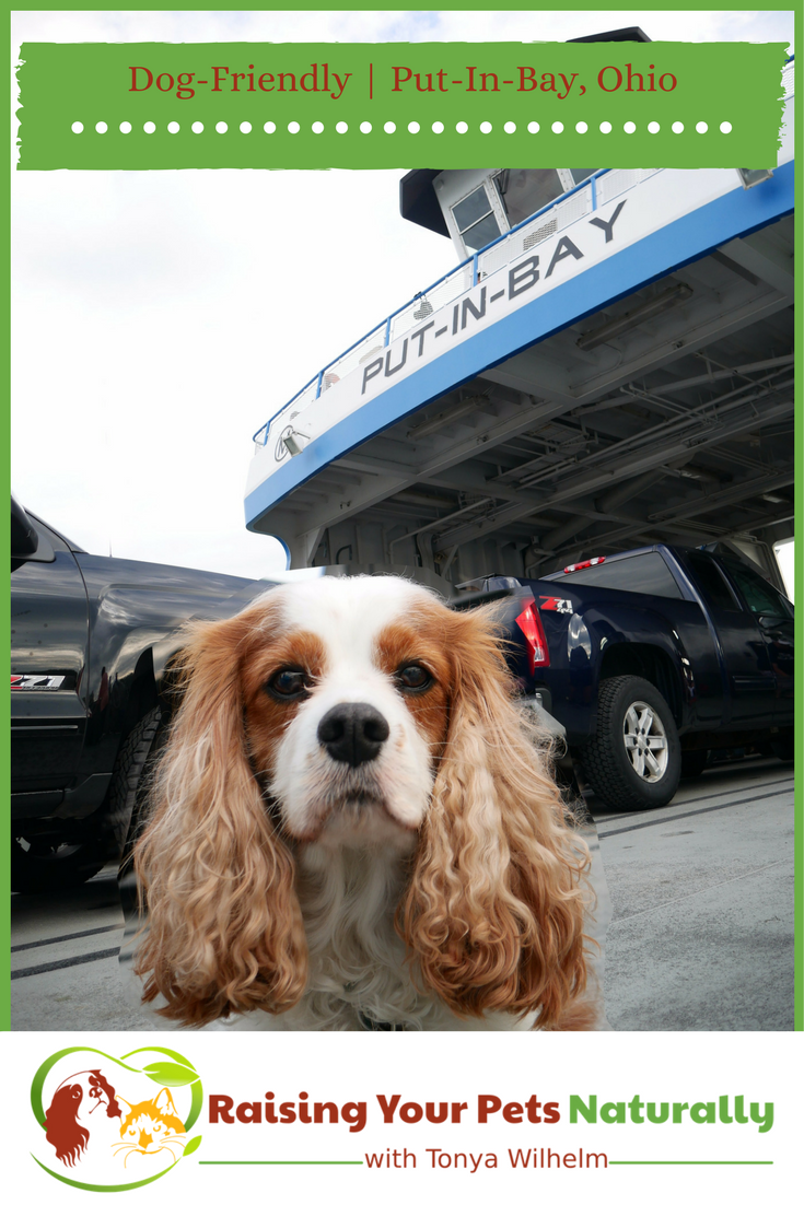 Dog-Friendly Put in Bay, Ohio. Things to do in Put-in-Bay with your dog. Dexter and I loved our dog-friendly day trip at Put-in-Bay. #raisingyourpetsnaturally #dogfriendly #putinbay #pib #ohio #dogfriendlyohio