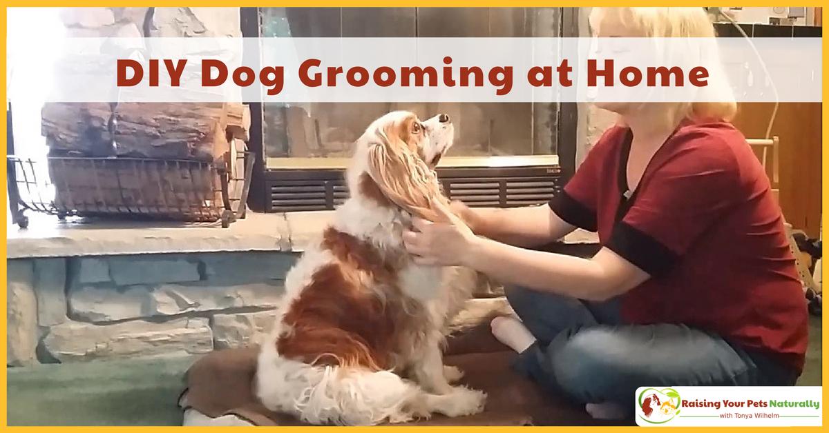 DIY Dog Grooming at Home. Basic Dog Grooming and How to Cut a Dog's Hair. #raisingyourpetsnaturally