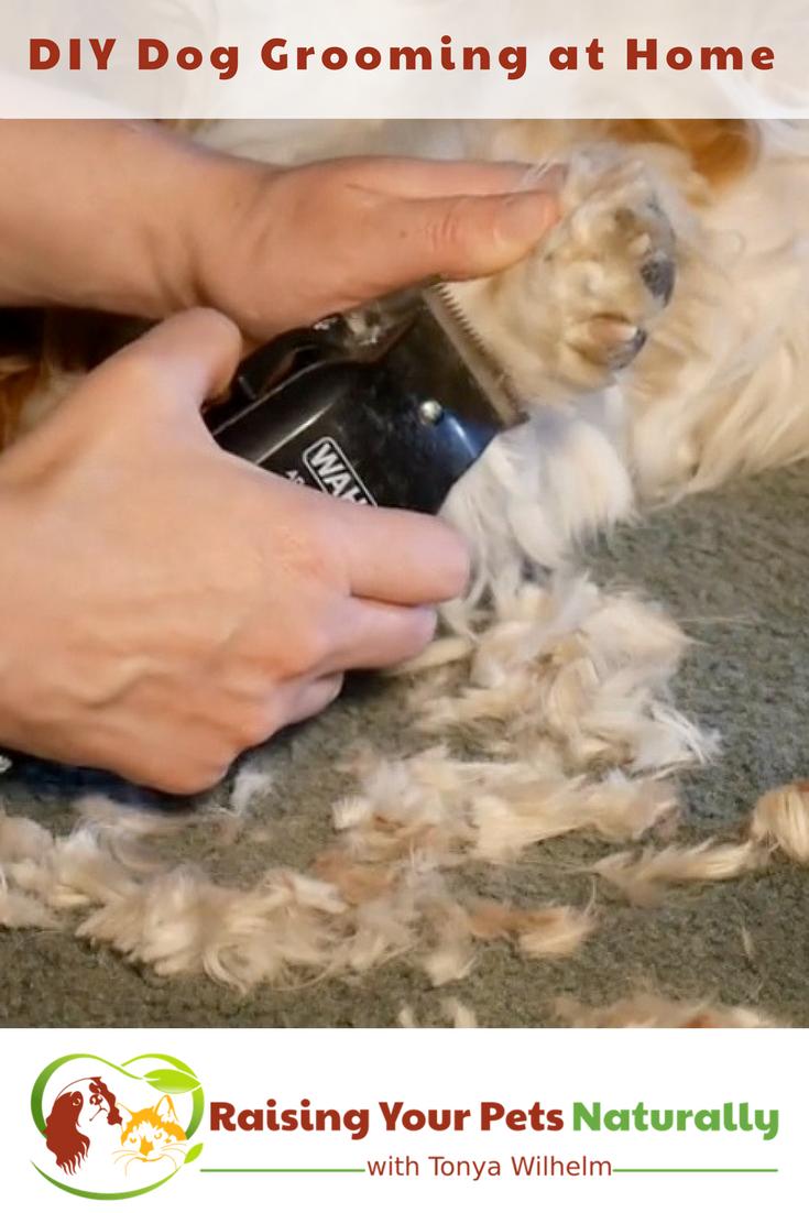 DIY Dog Grooming at Home. Basic Dog Grooming and How to Cut a Dog's Hair. #raisingyourpetsnaturally #doggrooming #diygrooming