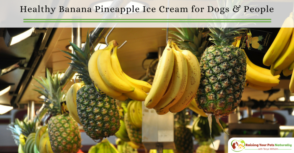 Banana and Pineapple dog ice cream recipe that you can share. Learn how to make this healthy homemade dog ice cream right in your own kitchen. #raisingyourpetsnaturally