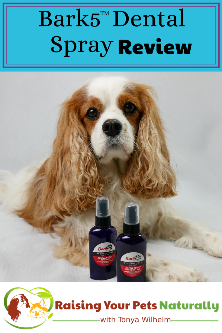 Dog Dental Care and Bark5 Dog Dental Spray Review. If you are looking for a natural dog cleaning system, you won't want to skip Bark5. #raisingyourpetsnaturally #dogdental #naturalpetcare #naturaldogcare #dogteeth #dogdentalspray