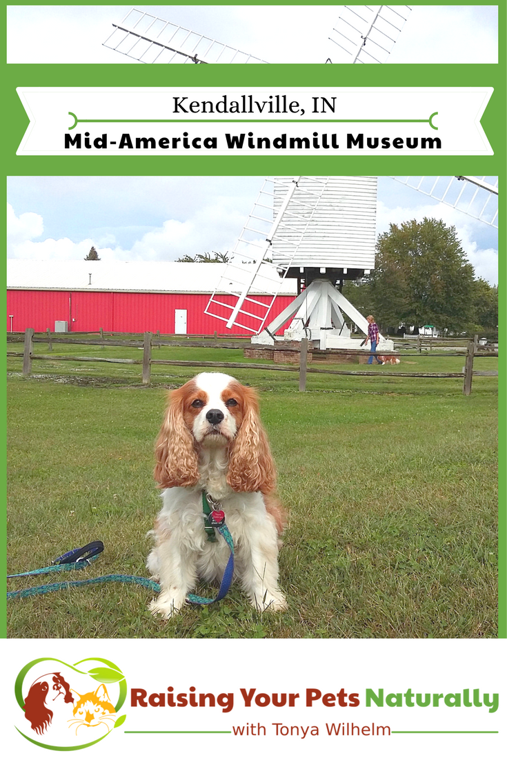 Dog-Friendly Indiana Attractions. If you are looking for a fun day-trip with your dog, check out the Mid-America Windmill Museum in Kendallville, Indiana. #raisingyourpetsnaturally #dogfriendly #dogfriendlyindiana #indiana