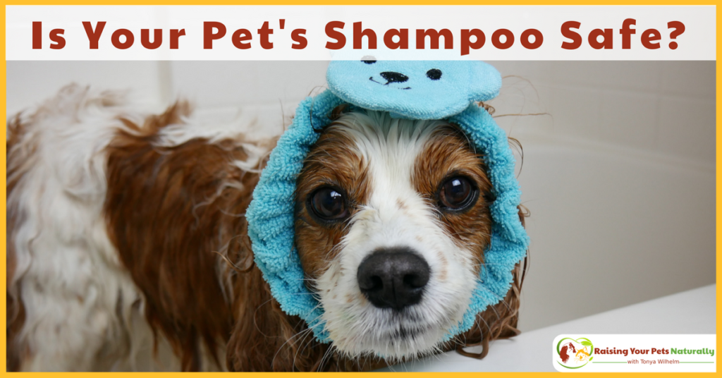 Is natural dog shampoo or natural dog shampoo really safe? Do you understand your dog shampoo's ingredient label? Learn how today. #raisingyourpetsnaturally