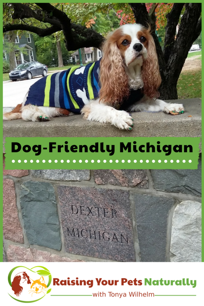 Dog-Friendly Vacations in Michigan. If you are traveling with dogs, you won't want to miss these Dog-Friendly Michigan attractions, hotels and destinations. #raisingyourpetsnaturally #dogfriendly #dogfriendlymichigan #travelingwithdogs