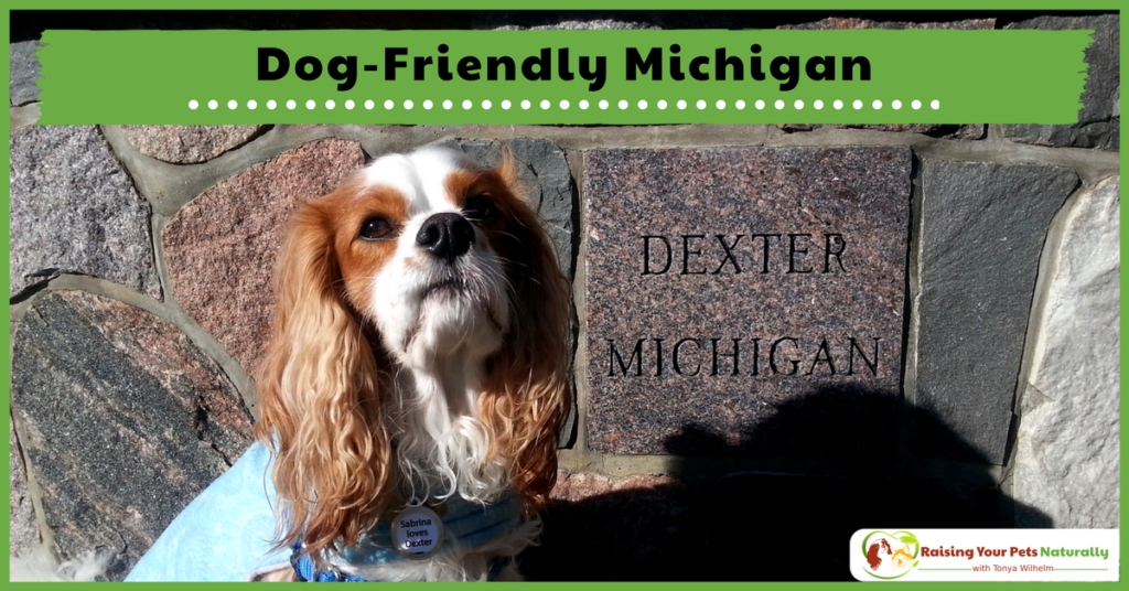 Dog-Friendly Vacations in Michigan. If you are traveling with dogs, you won't want to miss these Dog-Friendly Michigan attractions, hotels and destinations. #raisingyourpetsnaturally