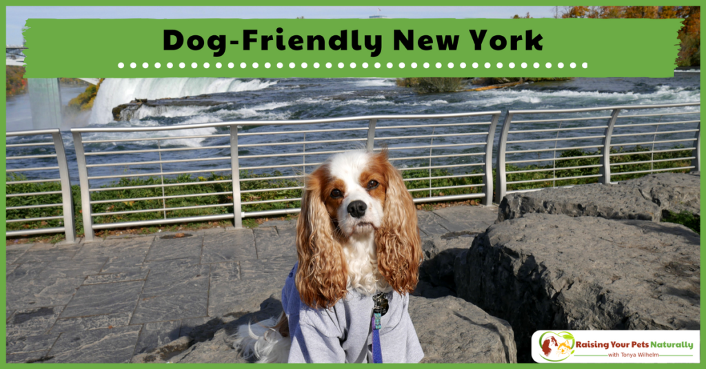 Dog-Friendly Vacations in New York. If you are traveling with dogs, you won't want to miss these Dog-Friendly New York attractions, hotels and destinations. #raisingyourpetsnaturally