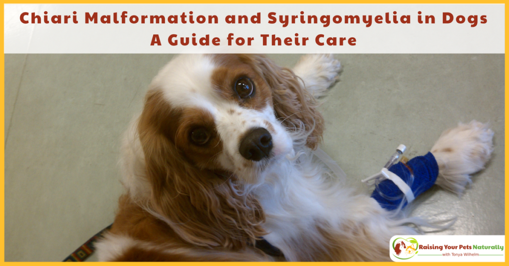 Chiari Malformation and Syringomyelia in Dogs. A Guide for Their Care and Treatment. #raisingyourpetsnaturally