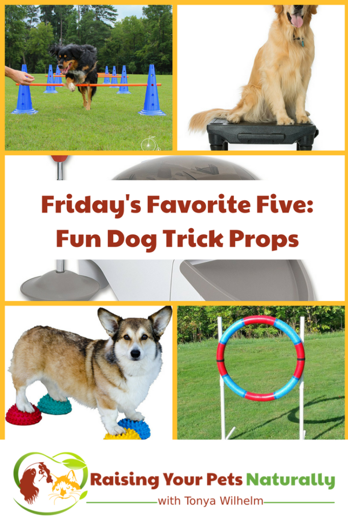 Friday's Favorite Five: Fun Dog Trick Props. I thought it would be interesting to share five fun dog trick props that you can use in your next positive dog training session. #raisingyourpetsnaturally #dogtricks #cooldogtricks #dogtraining #dogtrickvideos