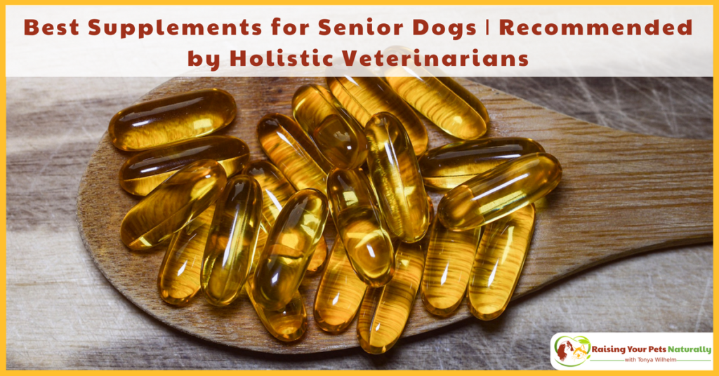 Supplements for Dogs, Especially Senior Dogs! I spoke with two of Dexter's holistic veterinarians on the best supplements for dogs. Click to read their dog supplement recommendations. #raisingyourpetsnaturally