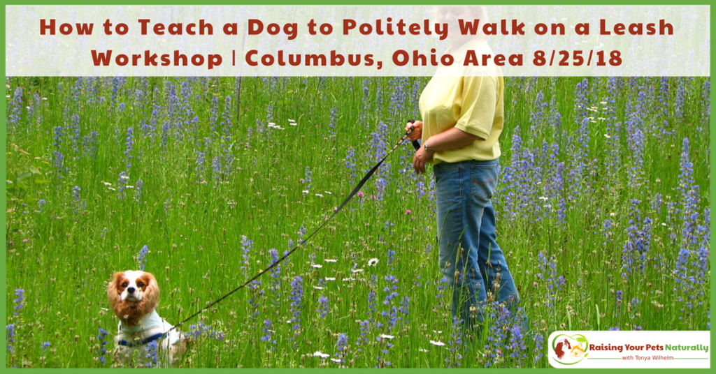 How to Teach a Dog to Politely Walk on a Leash Workshop | Columbus, Ohio Area #ColumbusDogs #ColumbusDogTraining #Columbus #ColumbusOhio