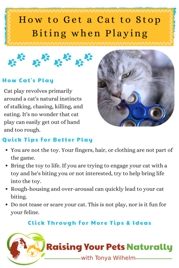 Why Does My Cat Bite Me During Play? | How to Get a Cat to Stop Biting when Playing. #raisingyourpetsnaturally #catplay #catbehavior #cattraining #natualcats #healthycats