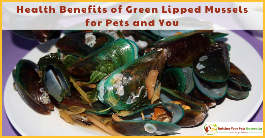 Health Benefits of Green-Lipped Mussels for Dogs and Cats. Mussels are great for joint pain and arthritis and so much more. #raisingyourpetsnaturally