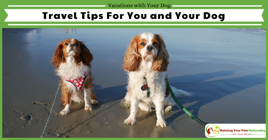 Traveling with dogs. Travel safety and tips when you take a pet friendly vacation. #raisingyourpetsnaturally #petfriendlyvacationrentals #dogfriendlyvacations #petfriendly #dogfriendly #travelbloggers