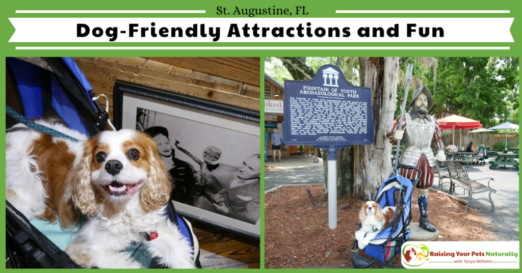 Traveling with Dogs in St. Augustine, Florida. Dog-Friendly Guide to St. Augustine, Florida with bonus travel video. #raisingyourpetsnaturally